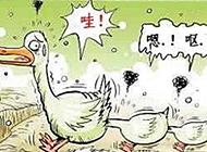 搞笑内涵鸭子跑步图片