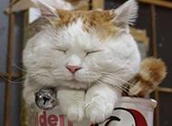 小猫睡觉姿势搞笑动物图片