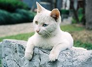 猫咪唯美萌照