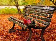 唯美秋天落叶优美风景图片壁纸