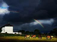 挂在天空的彩虹高清桌面壁纸