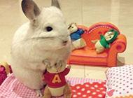可爱兔子胖嘟嘟卖萌美图精选