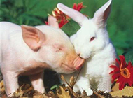 动物内涵图之我们恋爱了