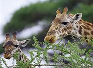 自然界野生动物高清图片第二辑