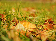 高清秋天森林风景图片壁纸