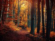 原始森林风景壁纸优美迷人