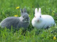 欢蹦乱跳的兔子意境图片