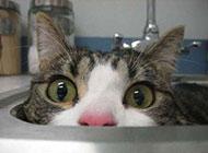 猫咪囧图表情之你看不到我