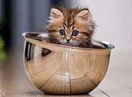 爱玩耍的小猫咪呆萌图集