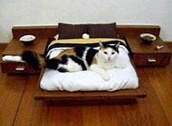 二货猫咪图片之我要减肥了