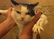 满脸无辜的猫咪还略显愤怒