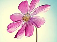 乡村田园风光小清新花朵背景