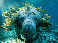动物壁纸可爱图片精美素材分享