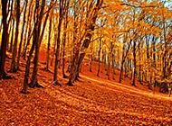 让人伤感的秋天落叶风景图片