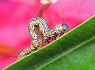 常见昆虫毛毛虫特写图片