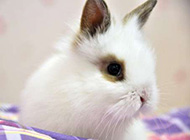非常惹人喜爱的小兔子图片