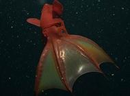 海洋动物们的神秘荧光
