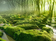 春天绿色唯美护眼风景图片壁纸