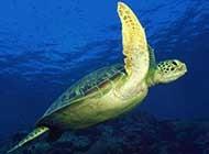 特写海底生物 海底的世界