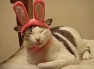 搞怪萌猫可爱抓拍图片分享