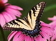 五彩斑斓高清晰蝴蝶壁纸