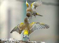 动物恶搞图片之鸟类金字塔
