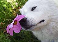 路边的野花不能采狗狗难过搞笑图片