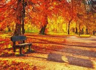 秋天公园风景图片壁纸唯美灿烂