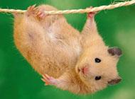 超萌可爱的动物合集唯美图片