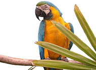 多彩鹦鹉高清组图写真