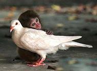 动物爆笑瞬间图片之跨种族的爱情