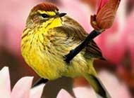 可爱小鸟栖息枝头唯美动物组图