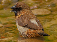 漂亮鸟类图片羽翼丰满