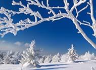 冬季万里雪飘唯美高清壁纸