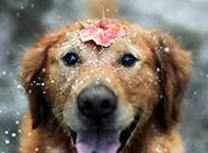 超萌狗狗精美特写动物高清壁纸