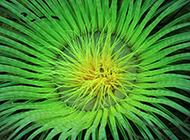 海葵珊瑚海底世界生物组图