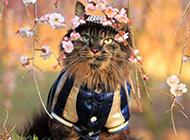 可爱猫咪草地玩耍桌面壁纸