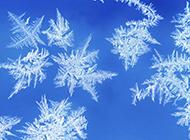 冬天雪花图片洁净唯美