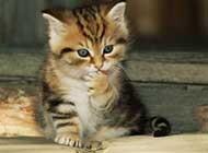 超级滑稽可爱小猫咪图片