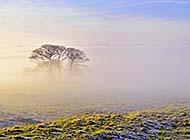 微雾笼罩的秋冬清晨唯美风景图片