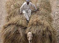 搞笑吐槽图片之可怜的骆驼