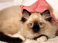 家养宠物猫咪高清萌图合集