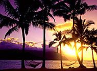 日落晚霞海滨椰林唯美景色
