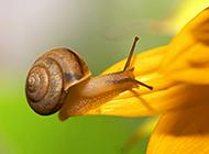 动物世界昆虫高清摄影图片