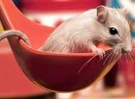 天真机灵的小仓鼠高清写真合集