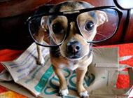 狗狗绅士造型萌图片大全