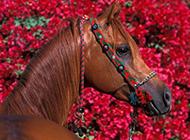 奔跑中的骏马高清动物图片