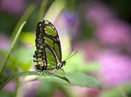美丽迷人的蝴蝶图片