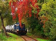 穿过秀丽风景的观光火车图片