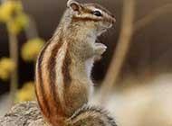 森林特写 松鼠